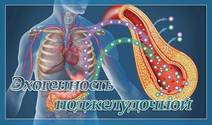 Повышенная эхогенность поджелудочной железы на УЗИ: что это значит, нормы