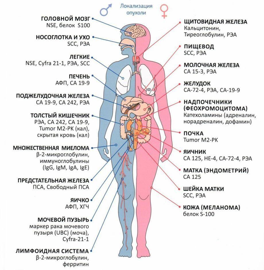 какие онкомаркеры сдавать при возможном раке жкт