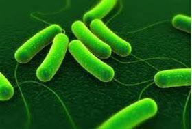 Зеленые бактерии