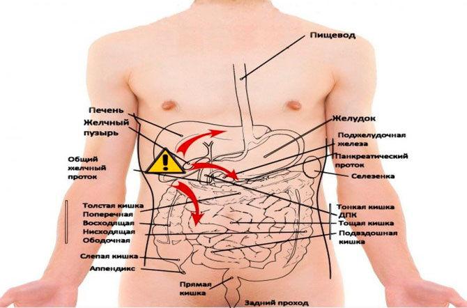 Месторасположение органов